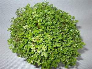 Pflanze Mit S : 1001 ideen f r zimmerpflanzen f r wenig licht ~ Orissabook.com Haus und Dekorationen