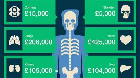 How Much Is by How Much Is The Human Worth Iflscience