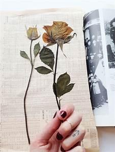 Comment Faire Secher Une Rose : cahier herbier cheap herbier de louise page with cahier ~ Melissatoandfro.com Idées de Décoration