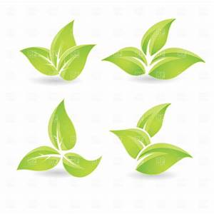 16 Leaves Tea Vector Images - Tea Leaf Vector, Green Tea ...