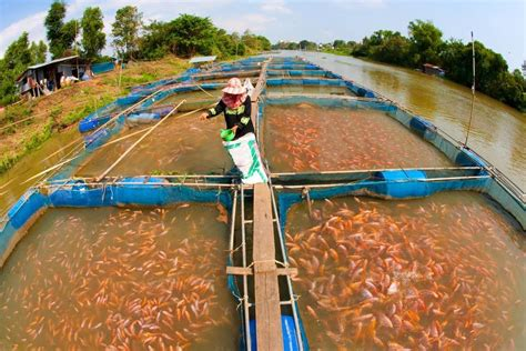 water quality affect aquaculture sensorex blog