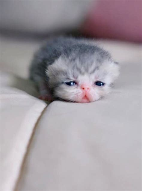 baby cats for best 25 newborn kittens ideas on kittens
