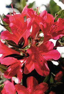 images  gardentoplant  pinterest shrubs