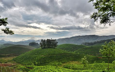 nature, Landscape, Hill, Trees, Clouds, India, Field ...