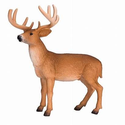 Deer Tailed Buck Woodland Mojo