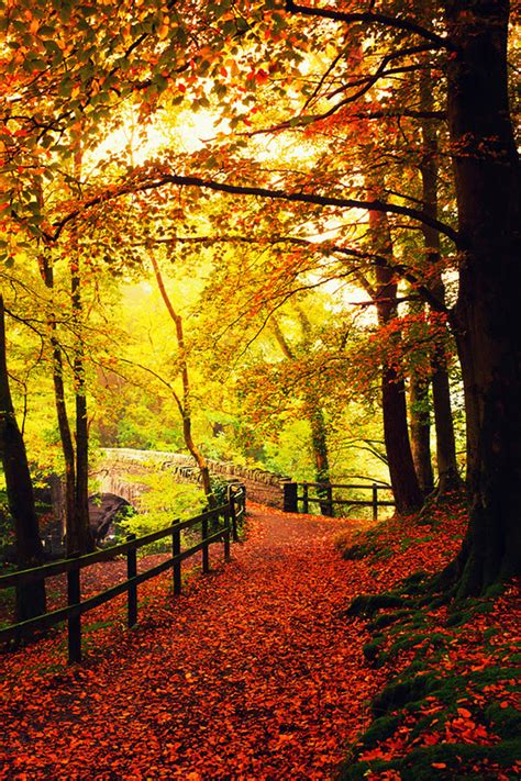 Fall Backgrounds For Phone by Autumn Phone Wallpaper Wallpapersafari