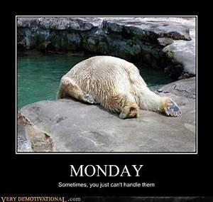 monday, polar bear, funny pictures | Chuckle | Pinterest ...