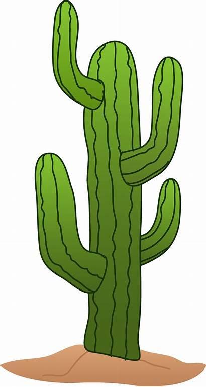 Cactus Clipart Clip Saguaro Sweetclipart