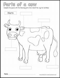 Label Parts Of A Cow Worksheet
