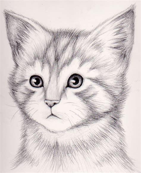 draw  realistic kitten draw realistic kitten