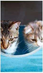 cats funny backgrounds - HD Desktop Wallpapers | 4k HD