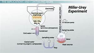 Stanley Miller  Theory  Experiment  U0026 Apparatus