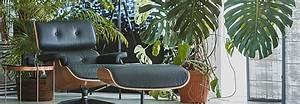 Dekorative Pflanzen Fürs Wohnzimmer : pflanze ~ Eleganceandgraceweddings.com Haus und Dekorationen