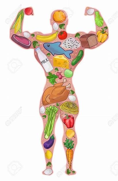 Healthy Diet Vector Athlete Illustration Protein Build