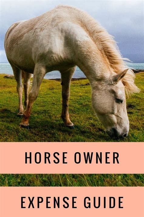 horse cost own does equinehelper guide goes
