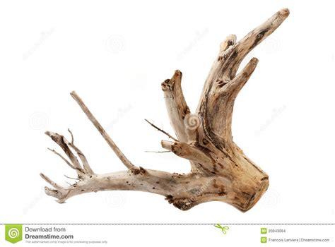 driftwood tree stump  white background stock photo