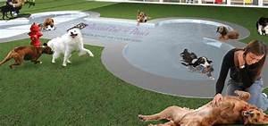 Hotel Pour Chien : innovation startup un h tel pour les chiens et chats ~ Nature-et-papiers.com Idées de Décoration