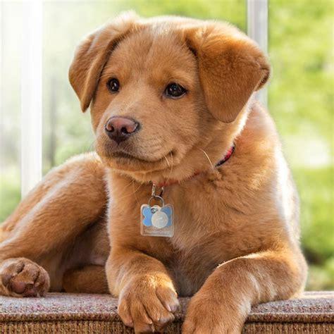 thundercover mini dog tag silencer clear chewycom