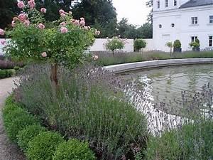 Rosen Und Lavendel : pflanzabstand buchsbaum lavendel rose mein sch ner garten forum ~ Yasmunasinghe.com Haus und Dekorationen