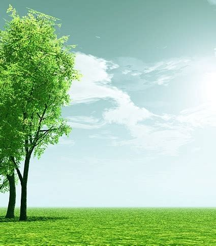 green trees background  stock