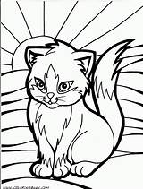 Coloring Cat Pages Kitty Realistic Printable Popular sketch template