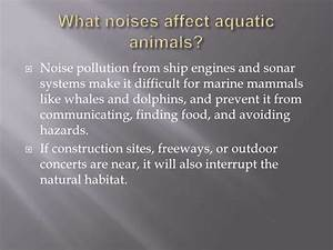 Effects Of Noise Pollution On Aquatic Animals