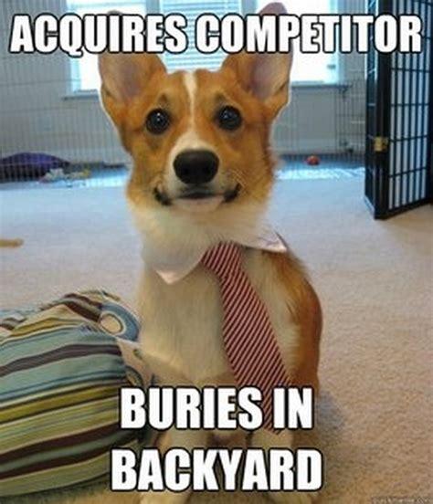 Funny Corgi Memes - funny memes 05