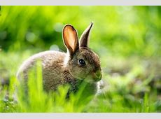 Hare Wallpapers Backgrounds