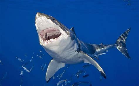 shark attack  south africas deadliest beach telegraph
