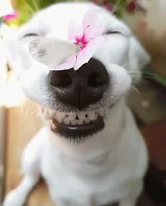 Cute Dogs GIF - Cute Dogs - Discover & Share GIFs