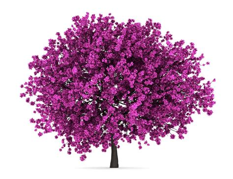 redbud facts numerous redbud tree facts that make for an interesting read