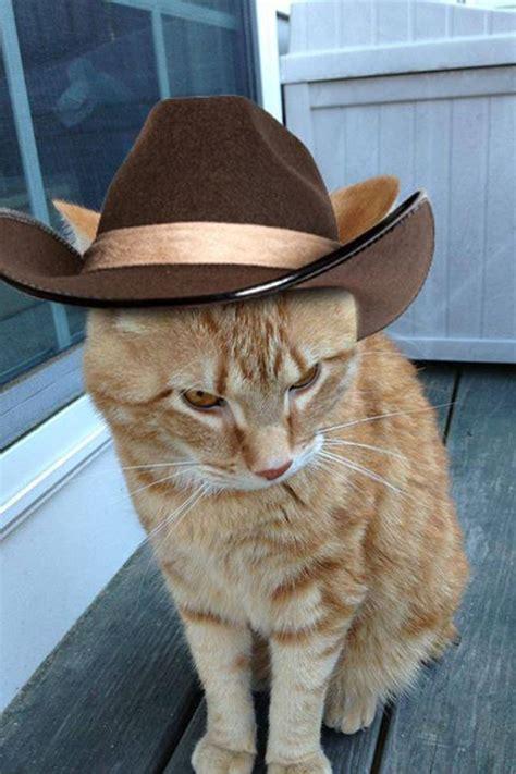 George The Cat Is Blind Deaf And Devilishly Handsome