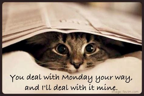 monday weekend cute animals humor funny fast too cat went again wake why animal cats visit pets start deal