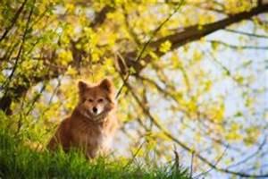 Welche Pflanzen Sind Für Hunde Giftig : bucheckern sind sie giftig f r hunde ~ Watch28wear.com Haus und Dekorationen
