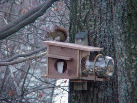 red squirrel nest box bird houses diy