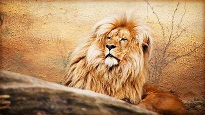 Lions Resolution