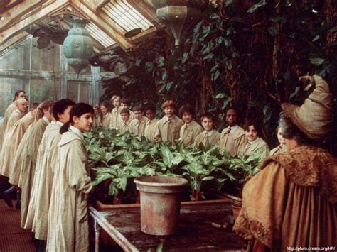 herbology plants herbology harry potter wiki