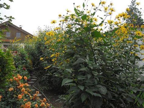 Alte Gemüsesorte Und Blühender Sichtschutz In