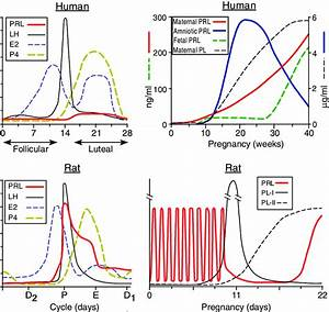 Comparison Of Hormone Profiles During The Reproductive