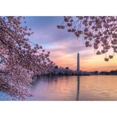 Best of the 2017 Cherry Blossom Festival: Washington DC