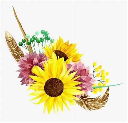 Sunflower Watercolor Clipart Clip Flower Flowers Transparent