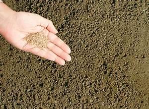 Semer Gazon Periode : implanter la pelouse r ussir le gazon implanter ~ Melissatoandfro.com Idées de Décoration