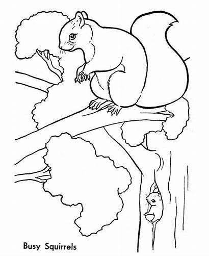 Squirrel Coloring Pages Animals Squirrels Animal Wild