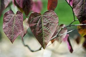 Top, 10, Plants, With, Purple, Leaves