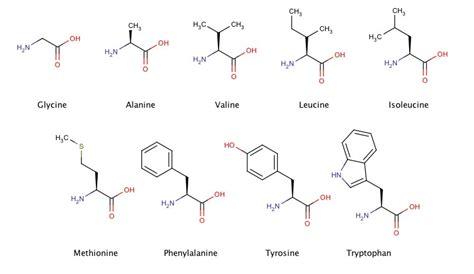 Aminozuren essentieel
