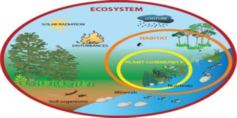 Ecosystem Definition Biology Ecosystems Assignment Point