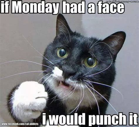 Grumpy Cat Monday Meme - funny monday memes college stack ucf coupons ucf food ucf words pinterest