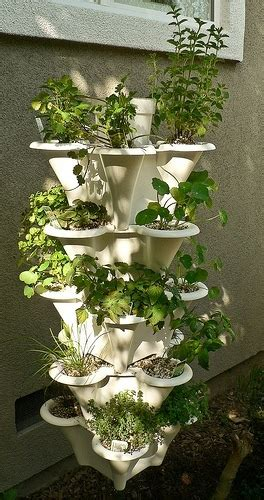 easy kitchen herb garden ideas  grow culinary herbs