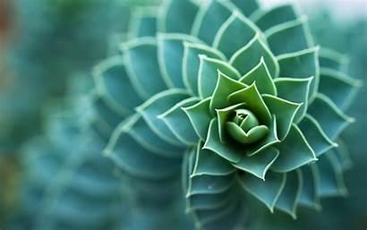 Plants Succulents Nature Macro Field Depth Mindfulness