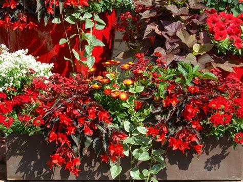Pflanzen Für Den Balkon by Pflanzen Ideen F 252 R Den Balkon